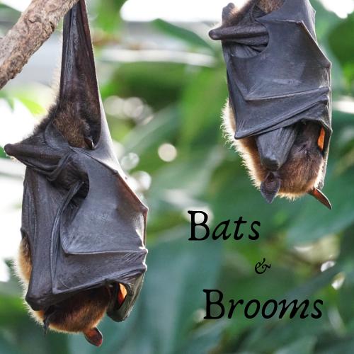 Bats and Brooms